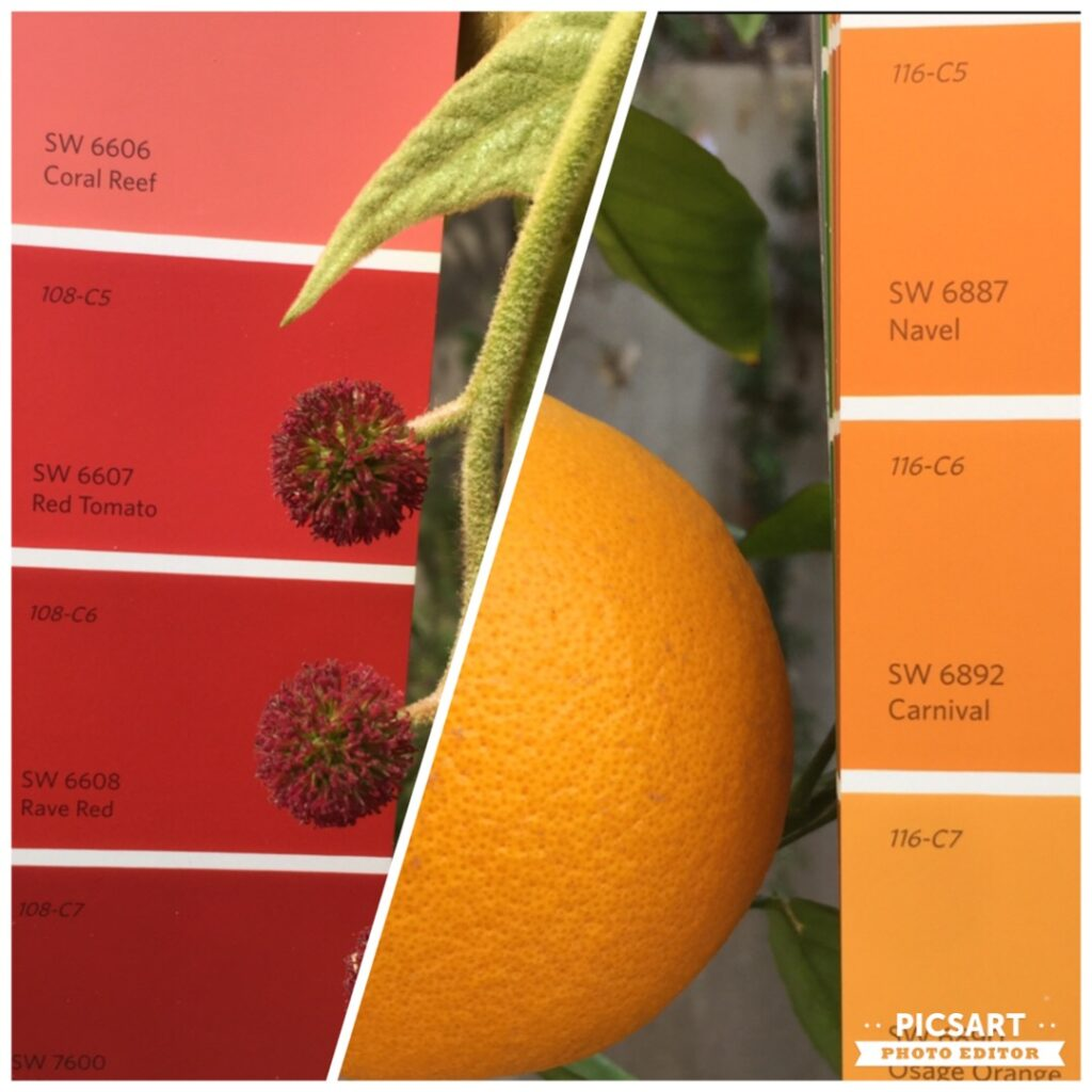 Sherwin Williams Colors