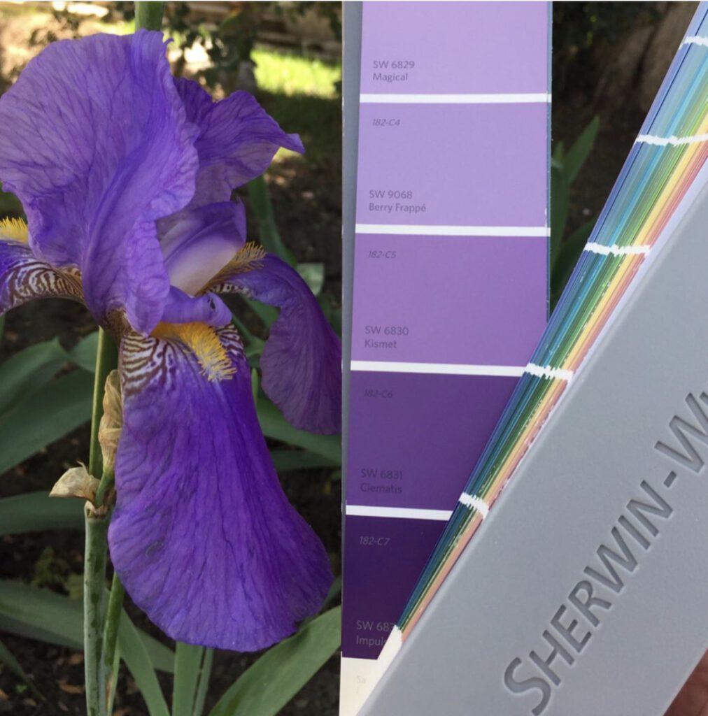 Sherwin Williams Purple