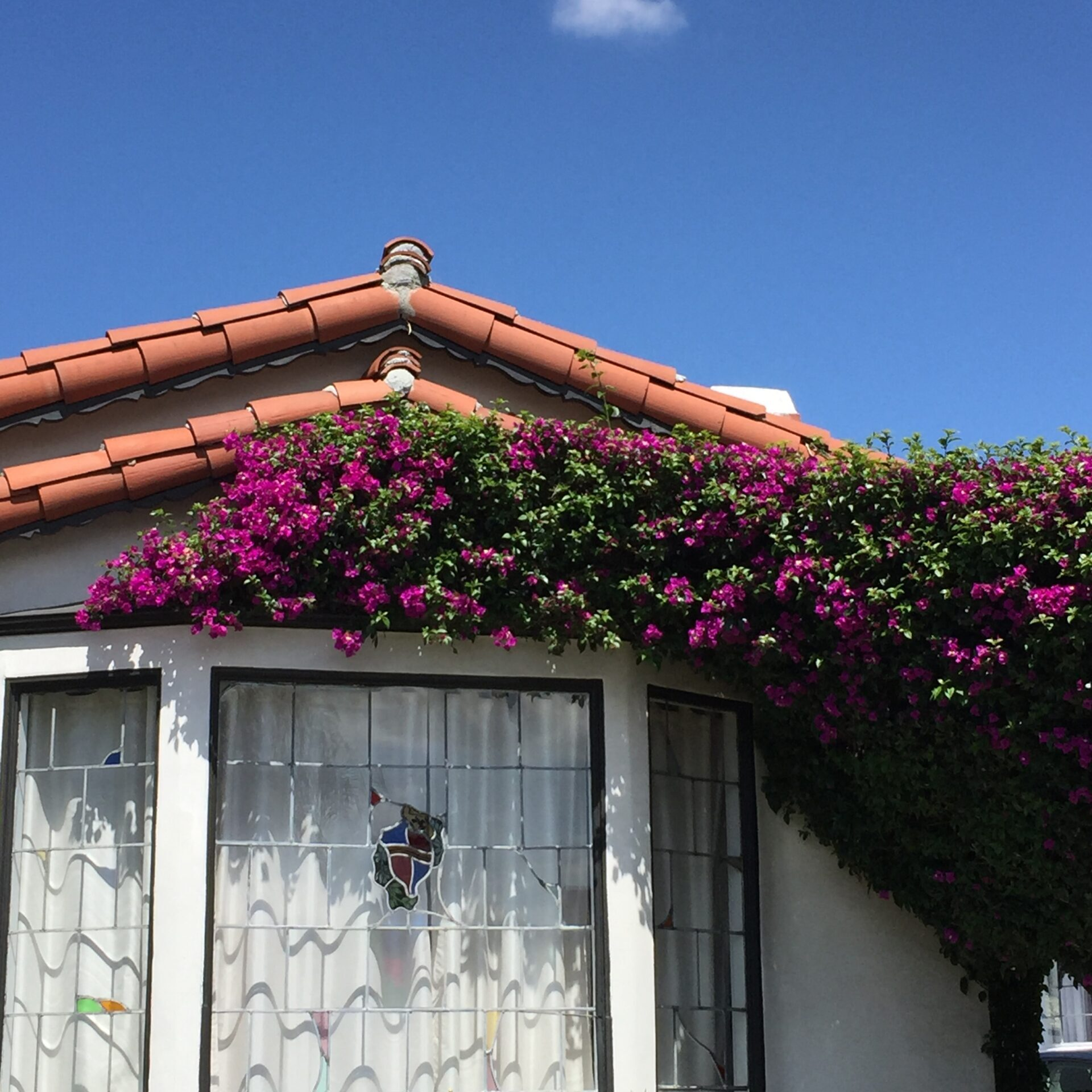 vines growing on house